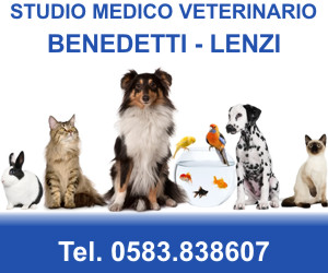 STUDIO MEDICO VETERINARIO BENEDETTI - LENZI